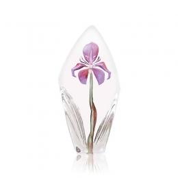 Mats Jonasson Crystal - FLORAL FANTASY Acarena purple, large - 34023