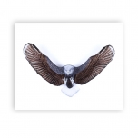 Mats Jonasson Iron & Crystal - LIMITED EDITION - INTO THE WOODS - Eagle wall sculpture painted by Ludvig Löfgren - 68132
