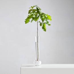 PADAM Vase clear/white