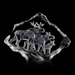 WILDLIFE Moose family