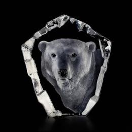 WILDLIFE Polar bear's face