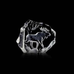 WILDLIFE Moose large